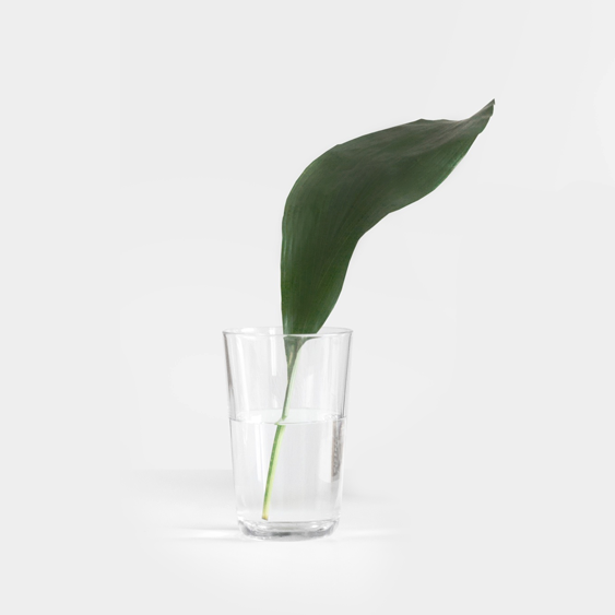 glass-plant