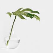 hero-plant
