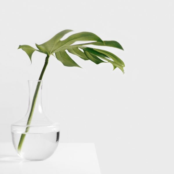leaf-01